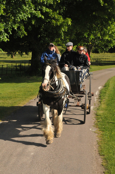 The cart behind us on the Jaunting Cart ride through Killarney National Park.
