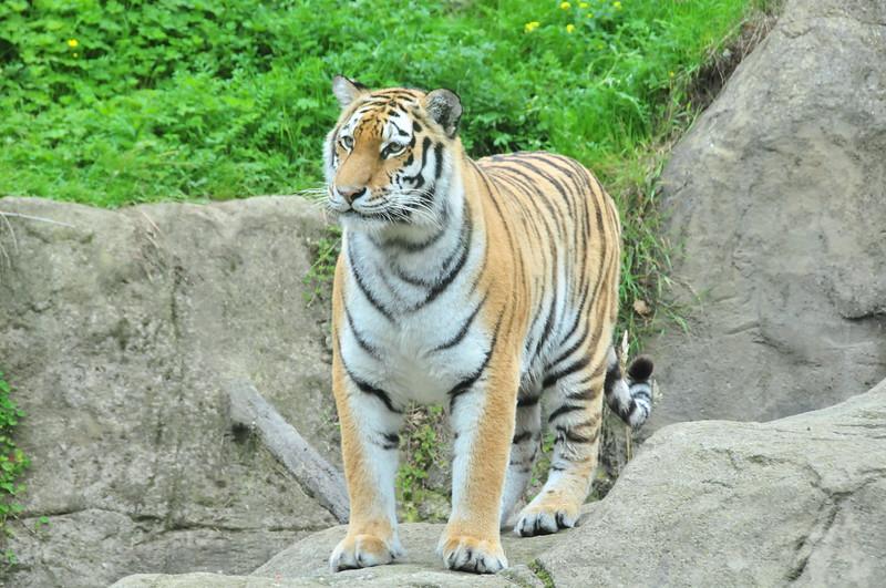 Dublin Zoo 06/08/2010     --- Foto: Jonny Isaksen