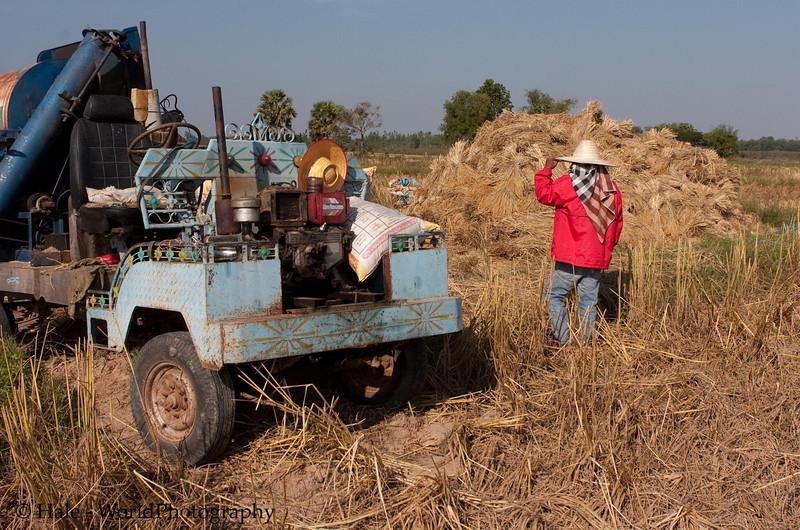 Threshing Rice In NE Thailand