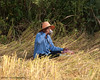 A Rice Harvester Taking A Break
