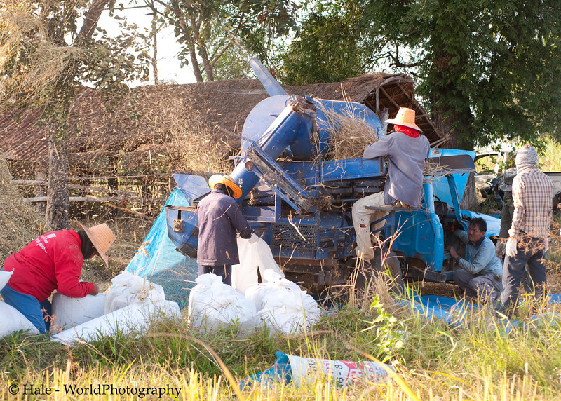 Rice Thresher In Isaan