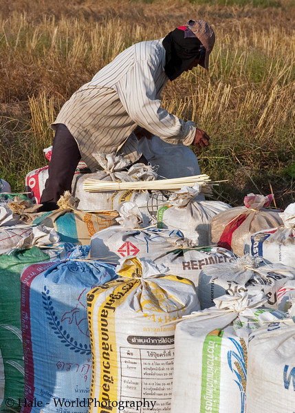 Bags of Freshly Threshed Rice