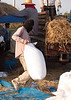 Bagging Freshly Threshed Sticky Rice