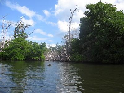 Mangrove Lagoon at La Restinga