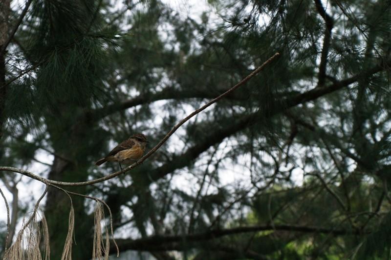 Los pájaros son extremamadamente curiosos