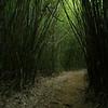 Caminando entre el bambu el primer dia de ruta.