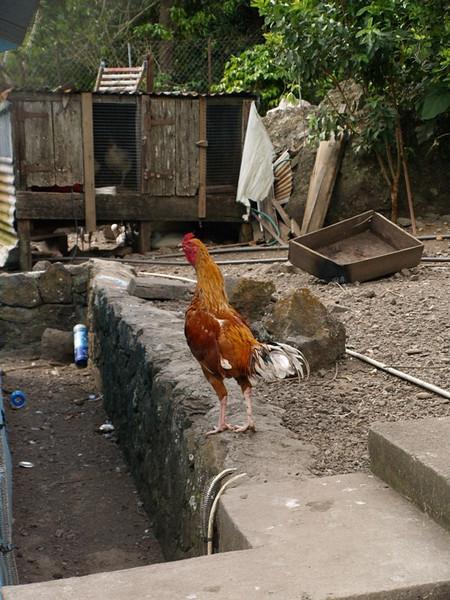 En las montañas cada casa tiene su pequeña granja de animales