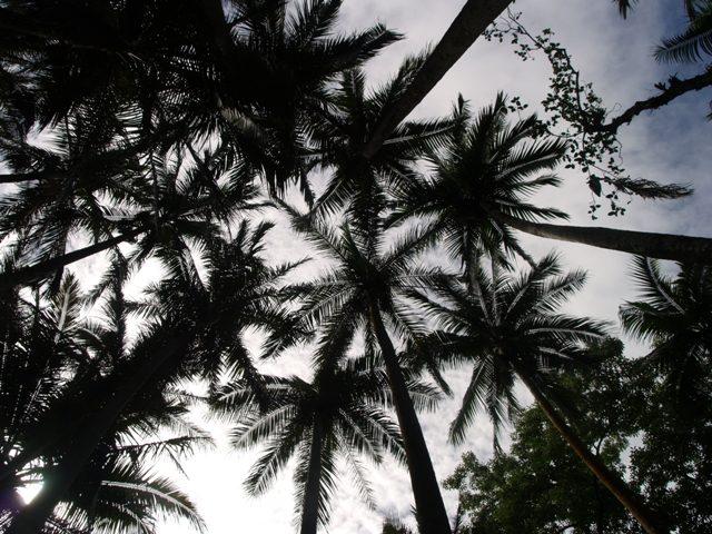Tuvimos tiempo de hacer una pequeña ruta al borde del mar, donde los bosques de palmeras nos evitaron una insolación