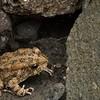 Una rana debería ser el simbolo de la isla, en la ruta debíamos sortearlas habitualmente.