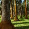 Un buen campo de palmeras donde acabmos haciendo picnic