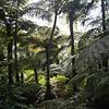 En altitudes bajas la selva es muy espesa. Algo de agradecer teniendo en cuenta que el termometro no bajaba de 35 grados celsius