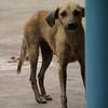 Un perro famélico nos pedía con la mirada los restos de nuestros bocadillos
