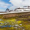 Isländisches Moos und die schneebedeckten Berge des Kerlingarfjölls