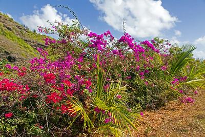 Roadside flowers in Kauai