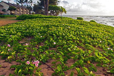 The beach at the Aston Islander Resort