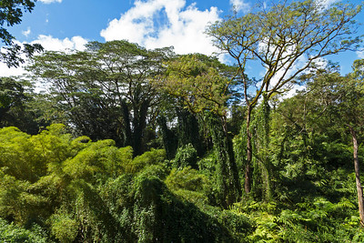Tropical forest in Akaka Falls State Park