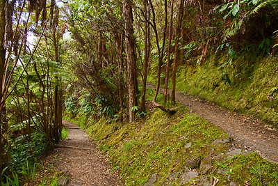 Walking trail with switchbacks that leads to the floor of Kilauea Iki Crator