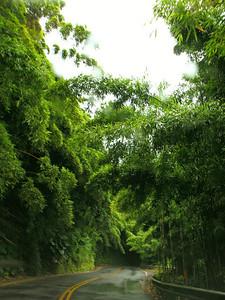 Dense bamboo trees along the Road to Hana.