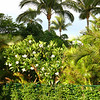 Grounds of the Hyatt Regency Maui Resort.