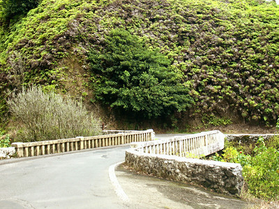 The vegetation along the Road to Hana is very lush as you pass through rain forests.