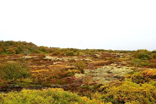 Haustfargar på Island