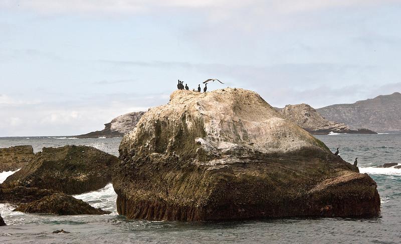 Cormorants standing guard