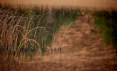Reeds on Loch Cill Chriosd
