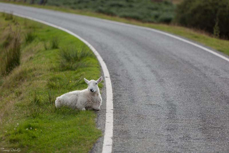 Peace, Isle of Skye, Scotland