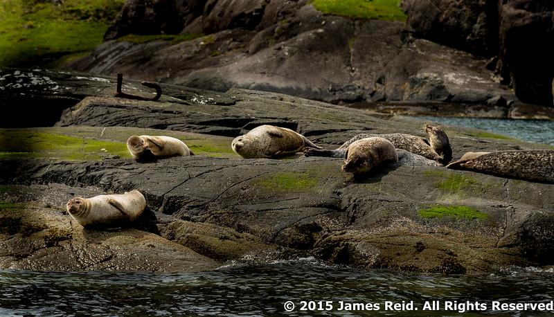 Sunning seals