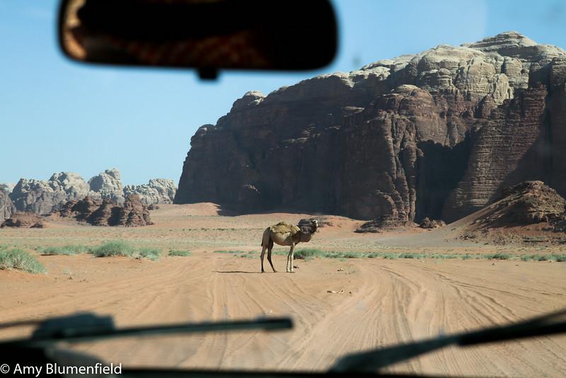 Roadblock - Wadi Rum, Jordan