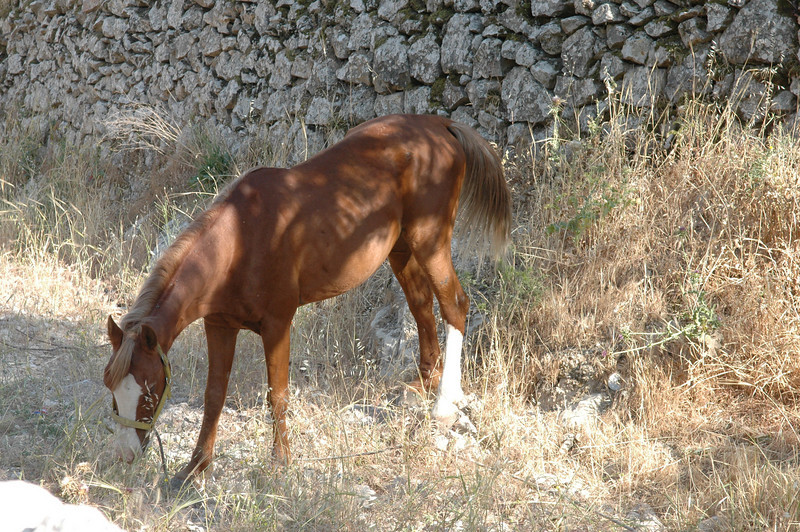 horse at the side of the street, Jerusalem