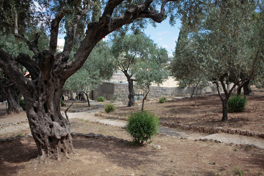 The garden of Gethsemene.  The greatest battle of all took place here.  A place for quiet reflection.