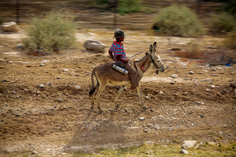 A little bedouin boy on a donkey.