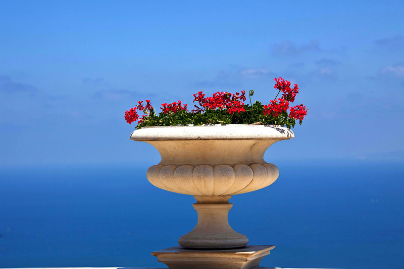 At the top of Haifa, flowerrs above the blue Mediterranean Sea.