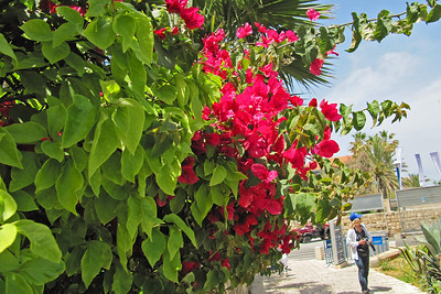 Jaffa - Park  Overlooking Mediterranean