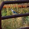 Kibbutznik bird