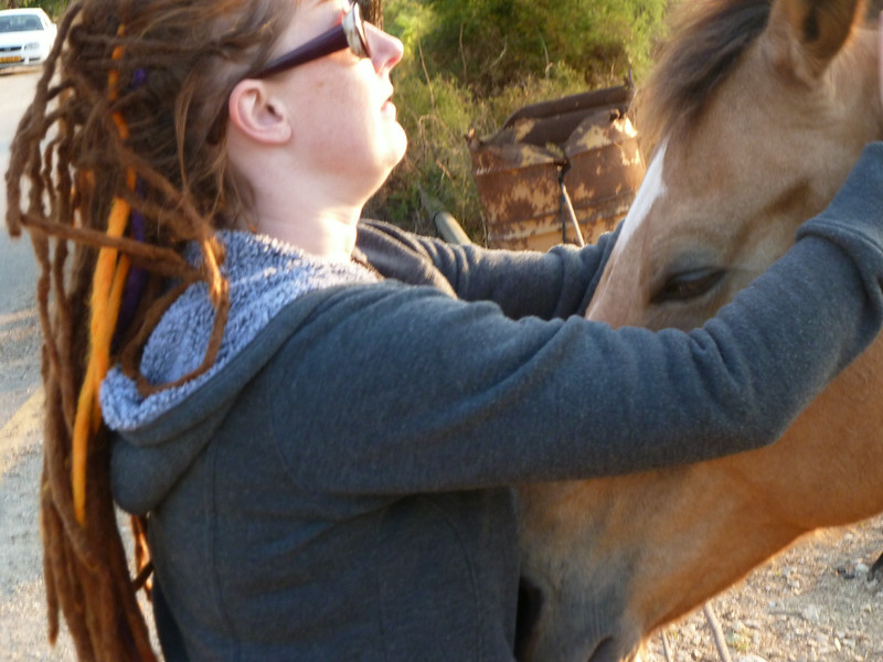 super sweet horse