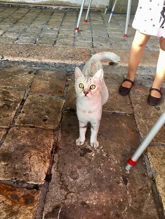 Cats everywhere in Israel...