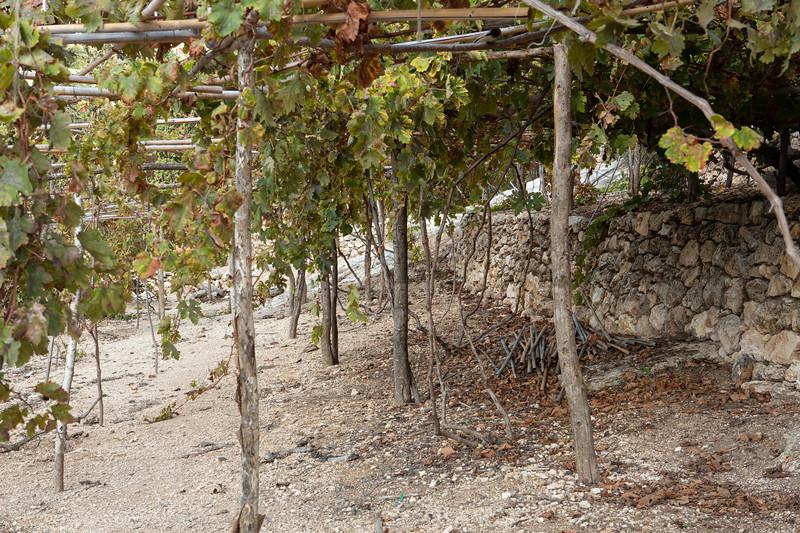 Nazareth village recreation of a first century vineyard