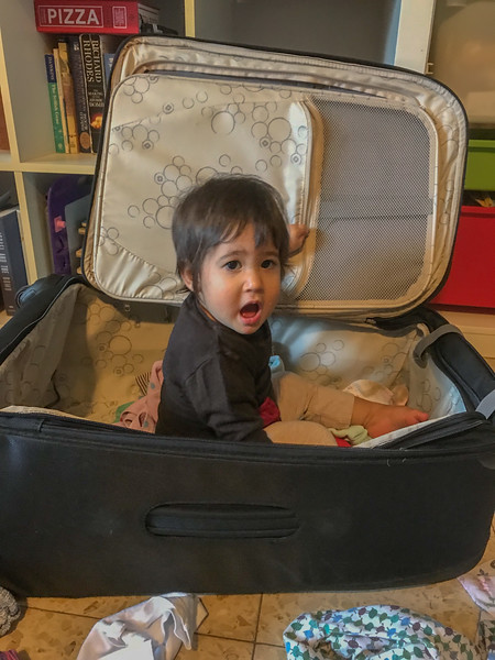 Is Kai trying to be a stow away in our luggage?