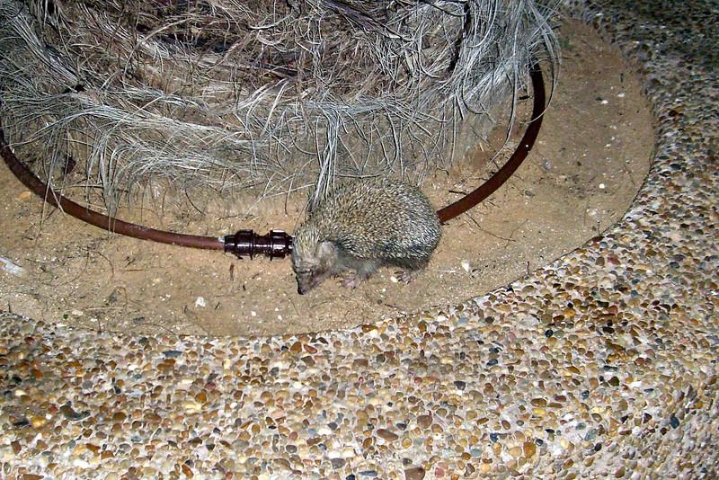 Critter in Haderra