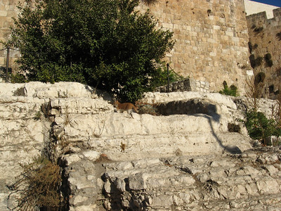 Day 4 in Israel - Temple Mount, Archeology of Jerusalem