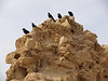 Masada -- birds on the lookout