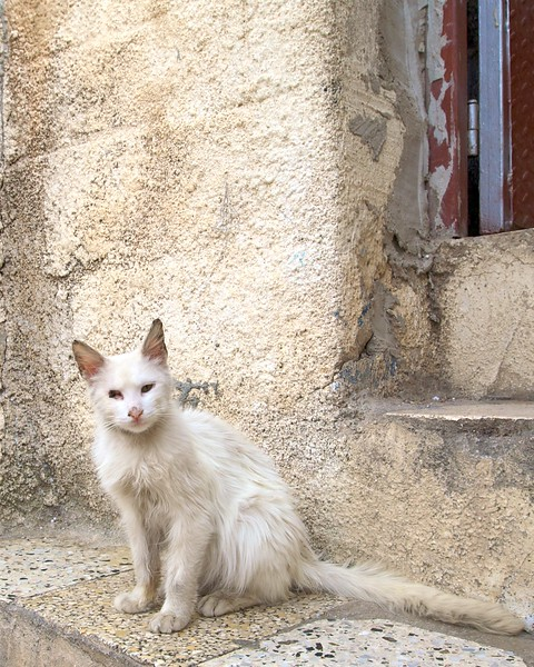 This cat was in one cat-fight too many.  check out the missing eye.