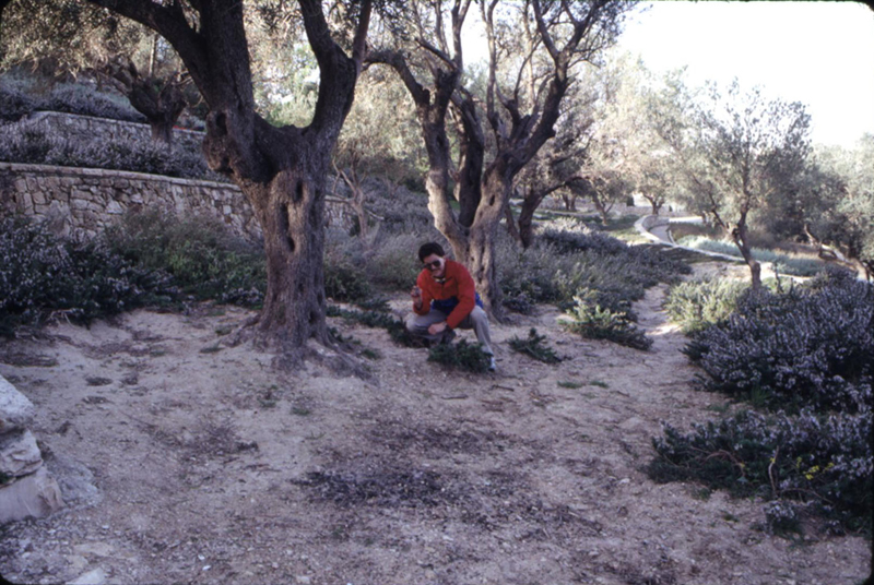 Garden of Gethsemane - where I picked out a rock for my Mom.