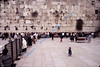 Western Wall.  The fence separates the women from the men.