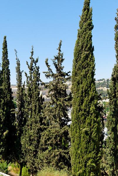 Jerusalem - Israel _3780