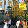 Wedding Humps - Tel Aviv, Israel (c) Daniel Yoffee