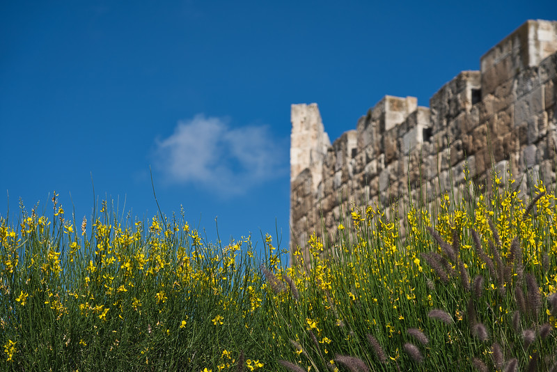 Spring Flowers in Front of Jerusalem Old City Gate