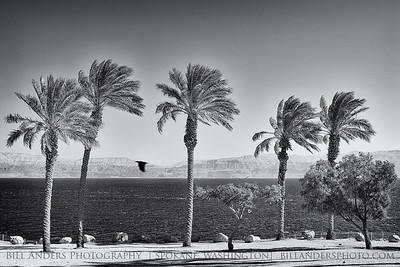 Dead Flight  Dead Sea, Israel.